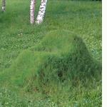 grasschair1